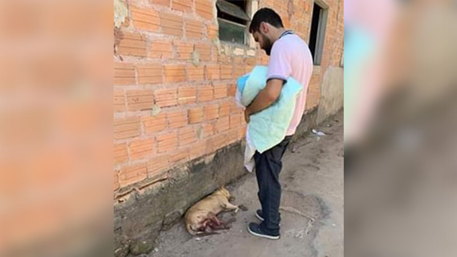 O animal foi encontrado em estado crítico na casa da tutora